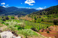 Valley with olive grove and vineyard. Beautiful valley with olive grove and vineyard in Sierra de Tramuntana in spring, Majorca, Spain Royalty Free Stock Photo