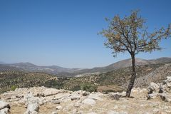 Valley of olive trees Stock Image
