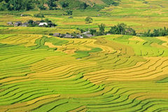 Valley of paddy waves Stock Image