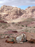 Valley in Petra Royalty Free Stock Photos