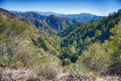 Valley of Pine Trees. Valley full of pine trees in the San Gabriel Mountains above Los Angeles California Royalty Free Stock Images