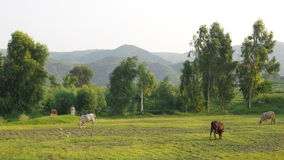 Valley in punjab Stock Image