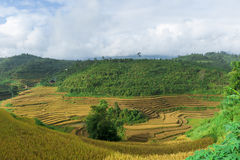 Valley of rice terraced field with cloudy sky Royalty Free Stock Images