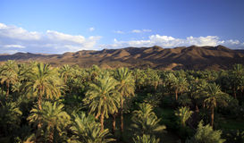 The valley of the river Draa, Morocco, Africa Royalty Free Stock Photo