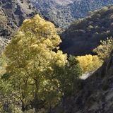 Valley of the river Genil in the path of the Sierra Nevada royalty free stock photo