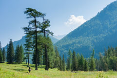 In the valley of the river Kucherla. Trekking in the Altai Mountains Stock Image