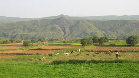 Valley of salt range Stock Images