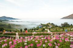 A valley sitting by water with fog and plants Stock Photos
