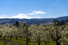 Valley of spring flowering orchards Royalty Free Stock Image