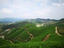 Valley tea garden terraces stock images