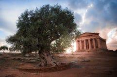 Tramonto alla Valle dei Templi ad Agrigento - Sicilia royalty free stock photo