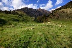 Valley in Tian Shan mountain, Kyrgyzstan Stock Image