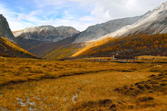 Valley on the Tibet Plateau Royalty Free Stock Photo