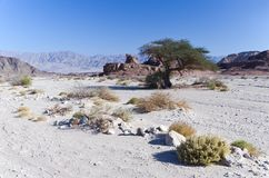Valley of Timna park, Eilat, Israel Stock Images
