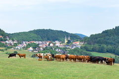 Valley with town houses and cows in meadow Royalty Free Stock Photography
