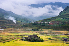 The valley. Tu le valley-YenBai province in vietnam Stock Images