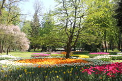 Valley tulip. Summer park with lots of tulips Royalty Free Stock Photos
