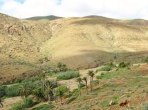 The valley of Vega de Rio Palmas on Fuerteventura Stock Images