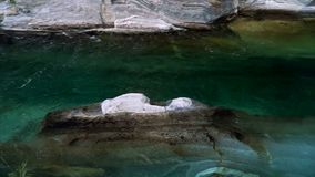 The valley of the Verzasca river with clear water. Lavertezzo, Switzerland. Movement of the camera using a Steadicam stock video footage