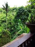 Valley view from Bali resort balcony. A green valley view of the Campuan Ridge, Ubud, Bali from the balcony of a tropical resort hotel.  Beautiful greenery in Stock Image