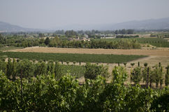 Valley view of a Northern California vineyard Stock Photography
