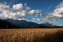 Valley view. A view over the fields of wheat, looking down the valley with the mountains and sky in the background Stock Image