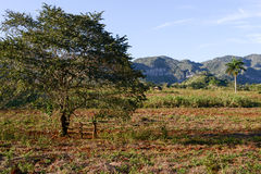 The valley of Vinales on Cuba Stock Photo