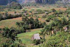 Valley of Vinales Landscape. Fields in Valley of Vinales Landscape Royalty Free Stock Photography