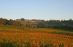 Valley of Vineyards Stock Photography
