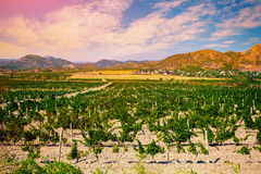 A valley of vineyards Royalty Free Stock Photos