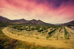 A valley of vineyards Royalty Free Stock Photo