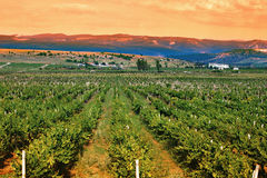 A valley of vineyards Royalty Free Stock Images
