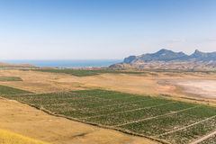 Valley of vineyards. In Crimea, Ukraine Stock Image