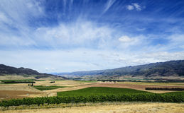 The Valley of Vineyards. The eco system of this major valley in Otago offers remarkable conditions for the production of wine Stock Photo