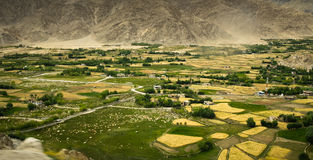 Valley with yellow and green farming plots. Landscape with yellow farming plots, houses and trees surrounded by barren mountains Royalty Free Stock Photo