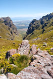 Valley with yellow wild flowers. Shot near Landdroskop, Hottentots-Holland Mountains nature reserve, near Somerset West, Western Cape, South Africa Royalty Free Stock Image