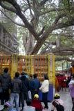 Vallfärdar hopsamling på det berömda Banyanträdet i Bohd Ghaya, var Buddha vann först enlightenm arkivbilder
