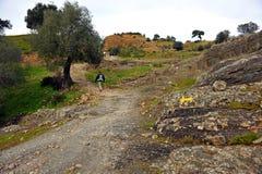 Vallfärdar i Mozarabicen Camino de Santiago, Cerro Muriano, landskap av Cordoba, Andalusia, Spanien Arkivbilder