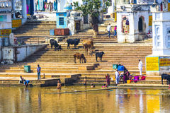 Vallfärdar på en bada Ghat på Pushkars den heliga sjön Arkivfoto