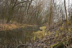 Vallgrav i skogen Arkivbild