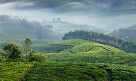 Valli verdi delle piantagioni di tè della montagna in Munnar Fotografie Stock Libere da Diritti