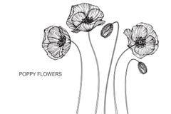 Vallmo blommar teckningen och skissar med linje-konst Arkivbild