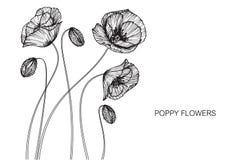 Vallmo blommar teckningen och skissar med linje-konst Royaltyfri Bild