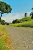 Vallmo på den Appia anticagatan i Rome Royaltyfri Foto