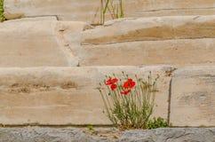 vallmo på marmortrappa Arkivfoton