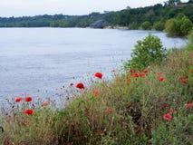 Vallmo på Natchez under kullen vid det väldiga Mississippiet River royaltyfria foton