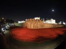 Vallmo på tornet av London Royaltyfri Fotografi