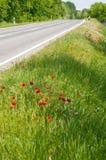 Vallmo vid väglodlinjen Arkivfoto