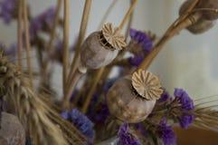 Vallmoaskar, torra violetta blommor och guld- grov spik 1 livstid fortfarande arkivfoto