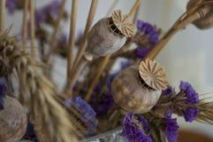 Vallmoaskar, torra violetta blommor och guld- grov spik 1 livstid fortfarande royaltyfri fotografi